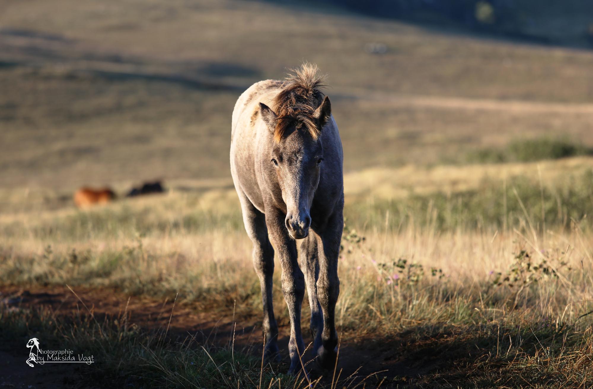 Die Fohlen sind immer in der Nähe ihrer Familien und entfernen sich selten von ihnen. © Maksida Vogt