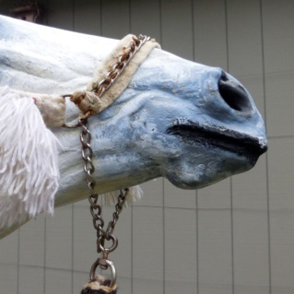 Fig.2. Felt noseband and link chain connection to a single rein. The chain is lightly attached to the felt with thread sutures. The horse's chin is pressure-free and pressure on the bridge of the nose is limited to the weight of the rein