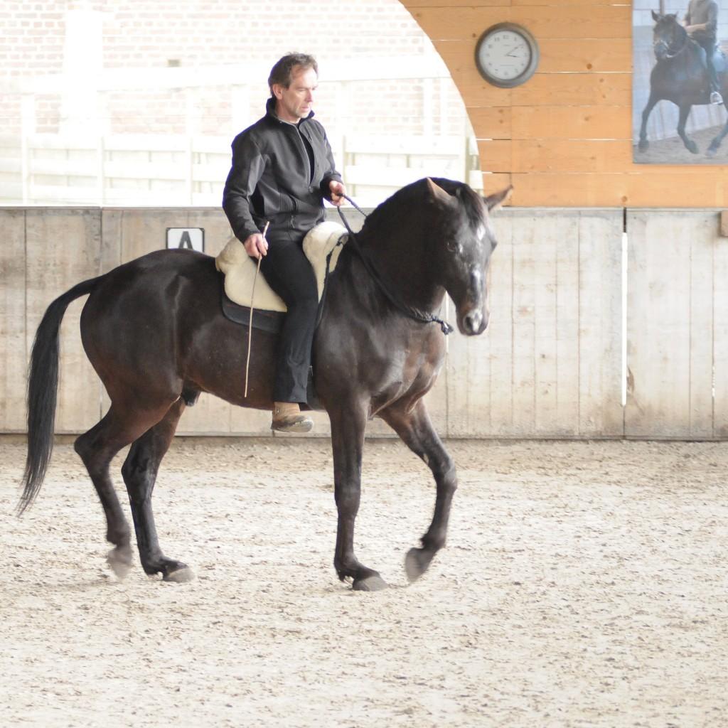 Pasjo in Versammlung mit Halsring. Ein gut ausgebildetes Pferd braucht keine Zügel, 2016 © Jossy Reynvoet