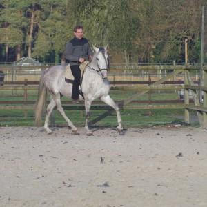 Das innere Hinterbein bewegt sich deutlich unter den Schwerpunkt von Silencio und erzeugt eine verbesserte Balance des Pferdes, 2016 © Jossy Reynvoet
