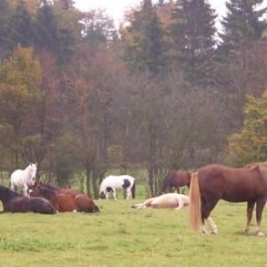 Die Herde entspannt und schlafend auch tagsüber, 2008 BU Birgit Schuster ©Birgit Schuster