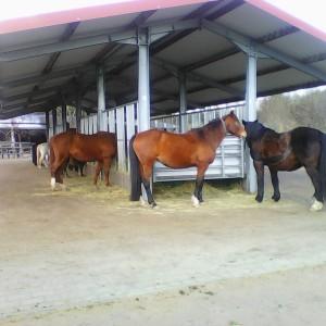 Eine große überdachte Heuraufe steht den Pferden ganzjährig zur Verfügung, wo sie zusätzlich neben der Liegehalle bei schlechtem Wetter Unterstand finden. 2017 BU Bernd Paschel ©Bernd Paschel