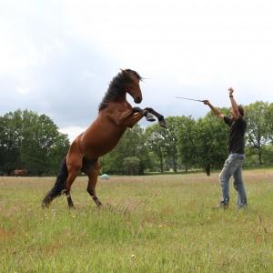 Freiheitsarbeit in der freien Natur ist die Königsdisziplin. BU: Bernd Paschel © 2012 Weinzierl, Foto: van Uden