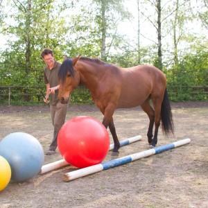 Das Spiel,schafft Abwechselung für Mensch und Pferd. BU: Bernd Paschel. © 2011, Weinzierl, Foto: van Uden