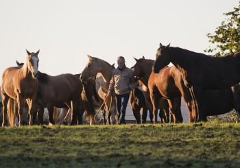 """""""Manager führen Pferde"""" – Bernd Osterhammel im WELTEXPRESS-Exklusivinterview"""