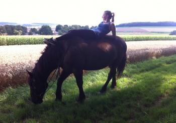 Warum Pferde mit dem Kopf wackeln