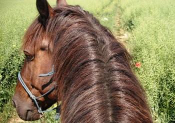Machen Grenzen Pferde glücklich?