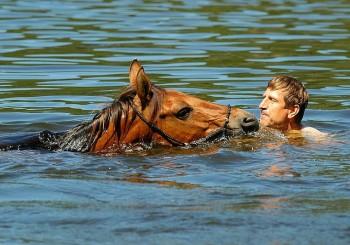 """""""Mein Jahr mit Pferden"""" – Vaclav Vydra im Interview"""