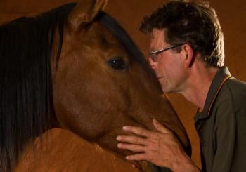 """Über """"Natural Horsmanship"""" und """"die Wahrheit über unsere Beziehung zum Pferd"""" – Uwe Weinzierl im Interview"""